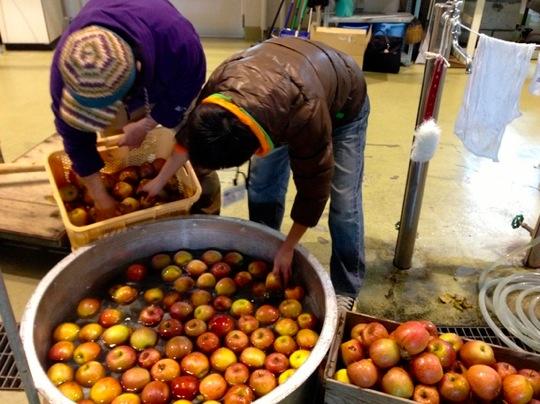 キャプション:陸前高田の名産品・米崎りんごを使った地ビール「りんごエールりくぜんたかた」も開発!