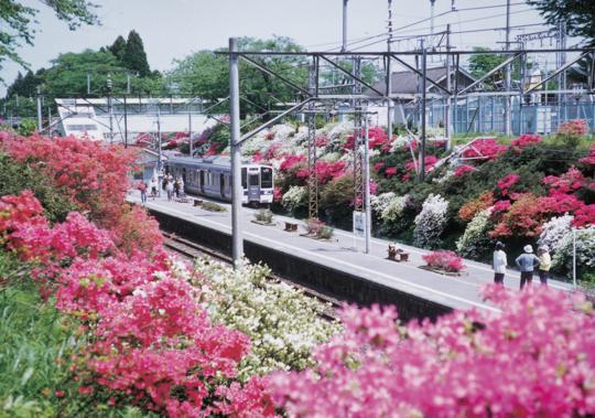 つつじが咲き乱れる5月の富岡町